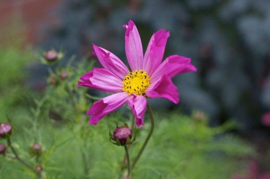 3a8d4-beautifulflower